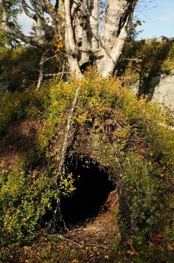 norrsj_winter habitat of a bear