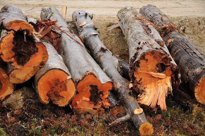 http://protecttheforest.se/images/avverkade%20naturvrdestrd_ryssland.jpg