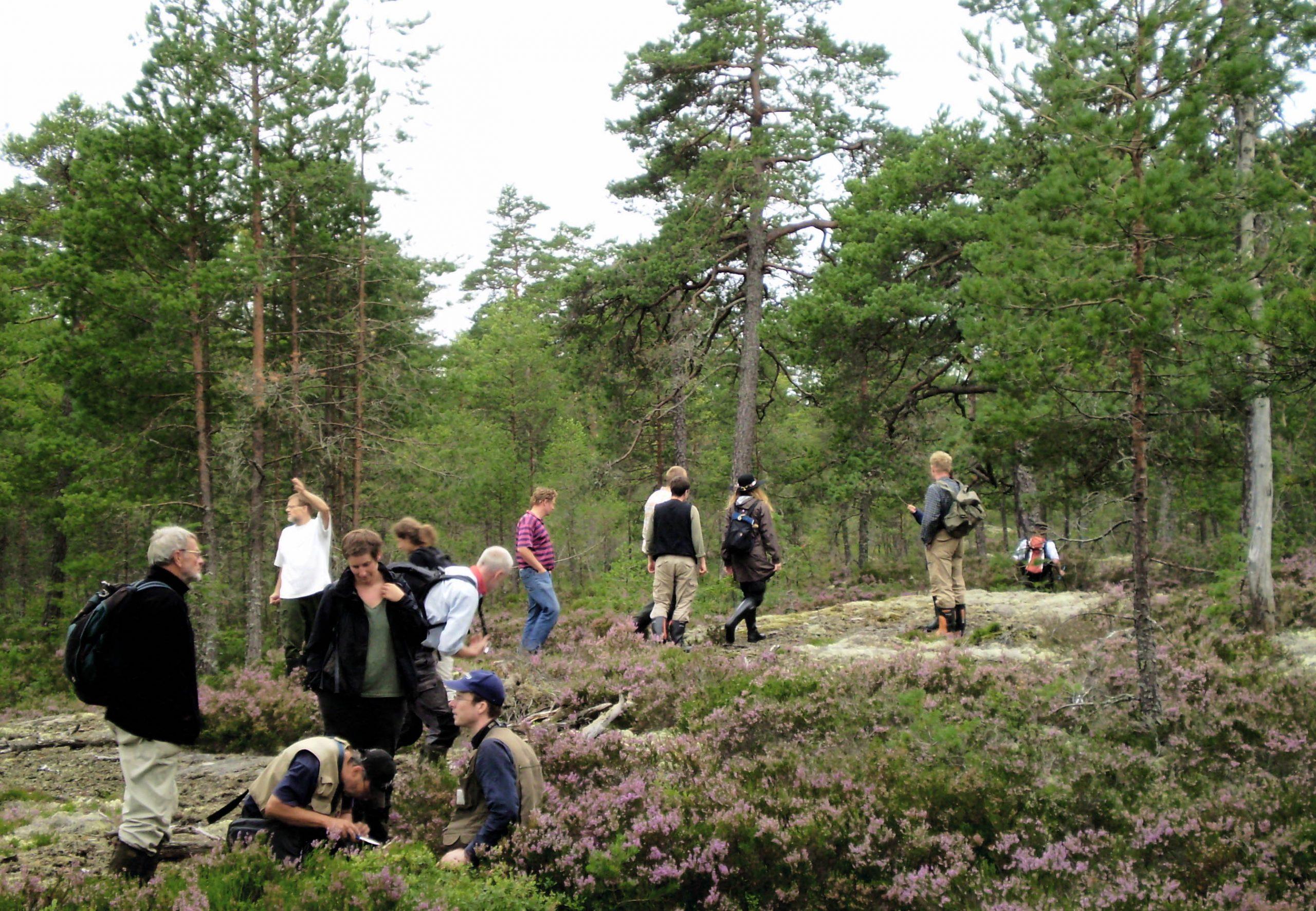 SkyddaSkogen_ibrunaBergen