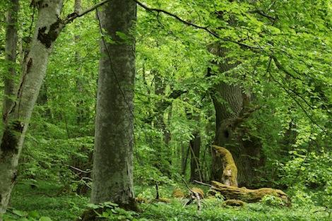 produktiv_skogsmark_Anders_Delin