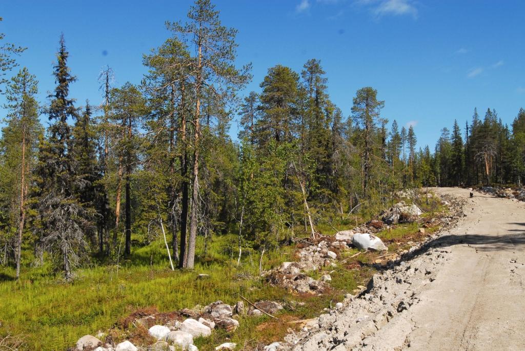 Nybruten väg i naturskog av nyckelbiotopsklass. Bilden är tagen i slutet av juni 2019. Foto: Björn Mildh.
