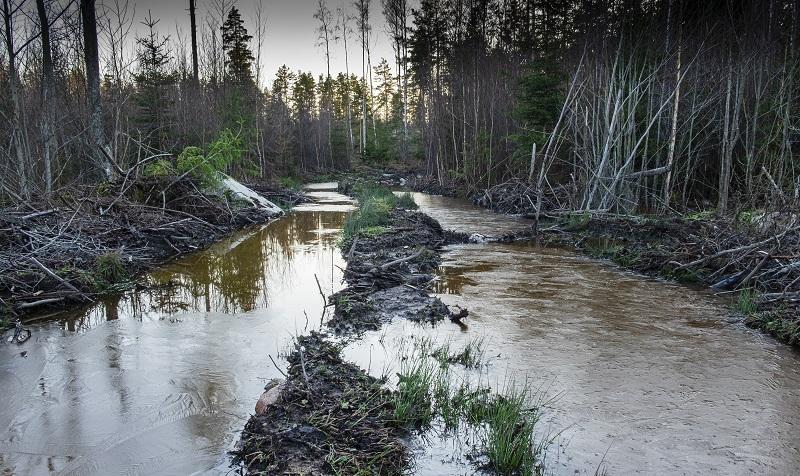 Sveaskogs marksakdor i Hedlandets naturreservat